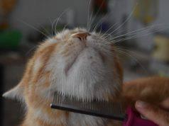 togliere nodi gatto pelo lungo