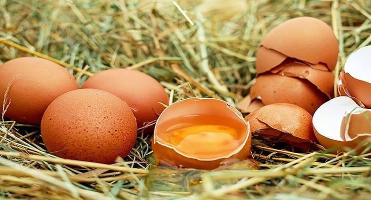 cane ingerisce uovo