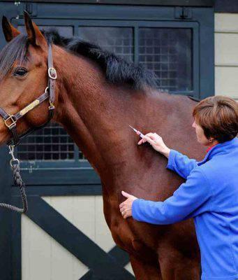 vaccino cavalli
