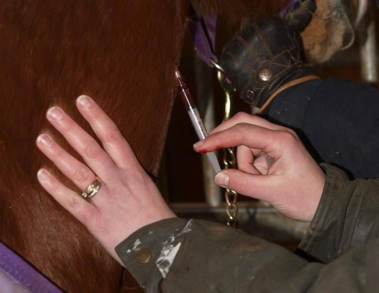 vaccinazione cavallo