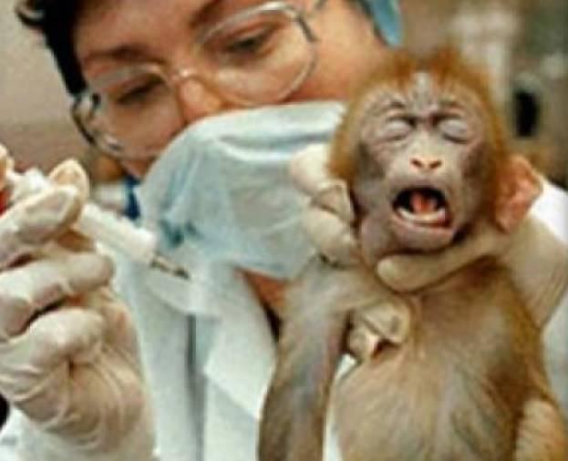 test sugli animali