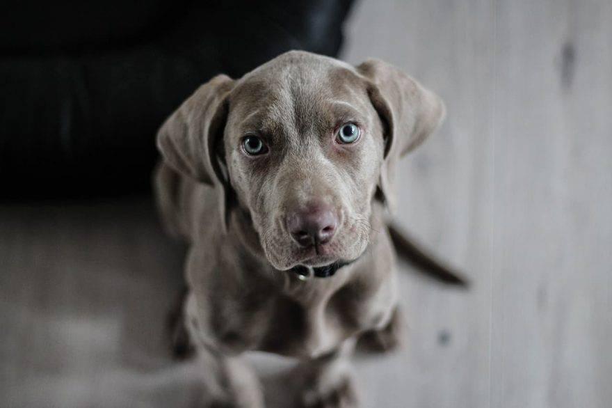 cane chiede aiuto