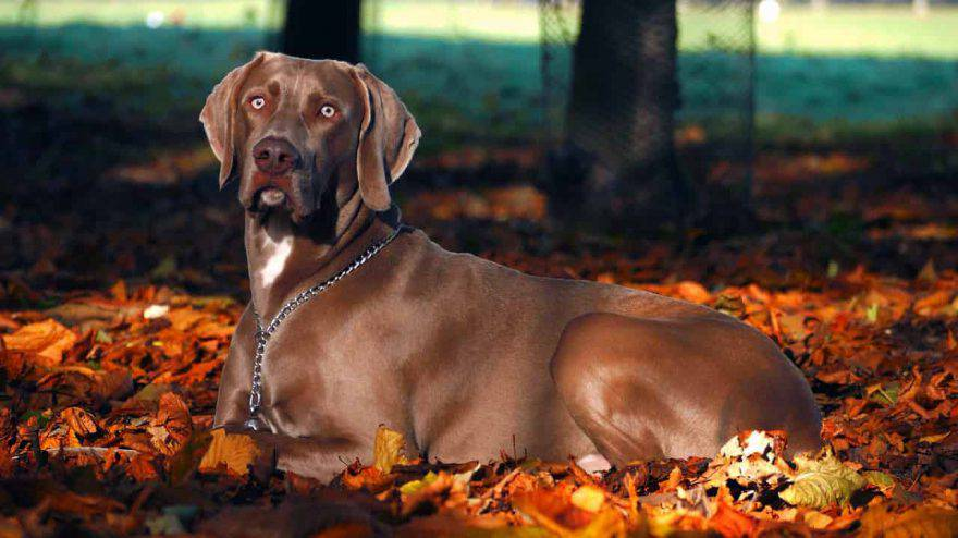 cane autunno