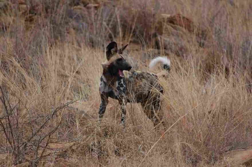 Mantrailing: lo sport dei cani segugio