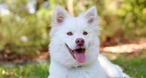5 nutrienti principali dieta cane foto virale