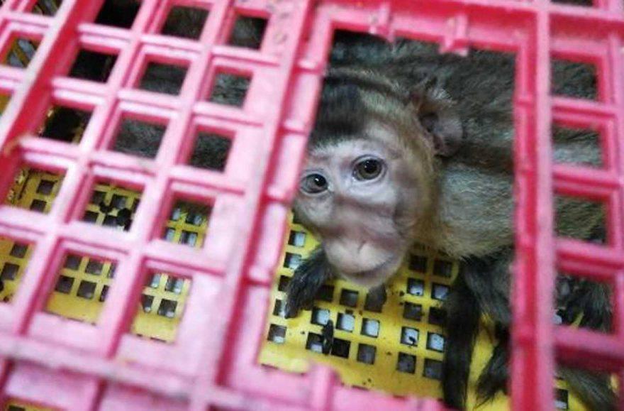 cina contrabbando animali