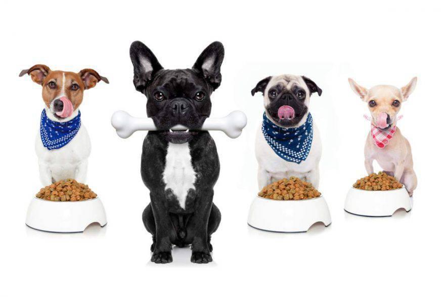 dare da mangiare a più cani