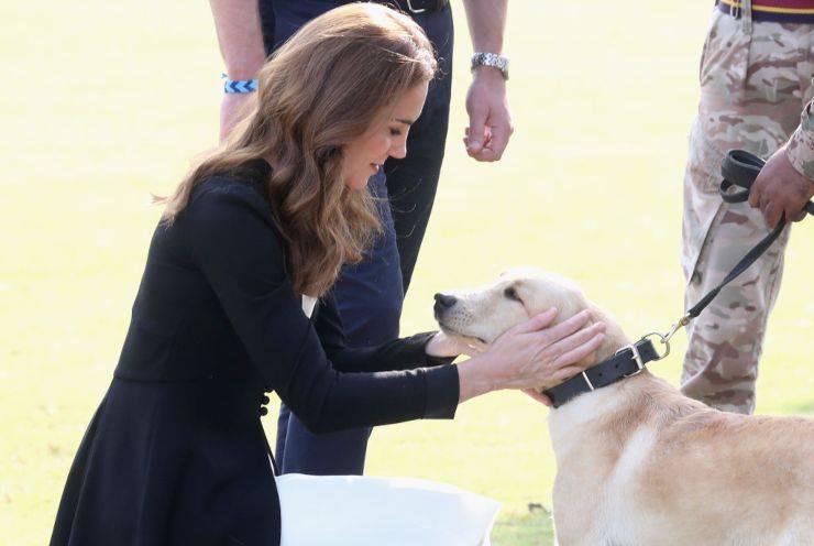 la principessa Kate ad Islamabad Pakistan presso il centro esercito canino in visita ai cani anti mine
