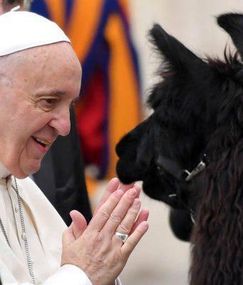 papa francesco animali