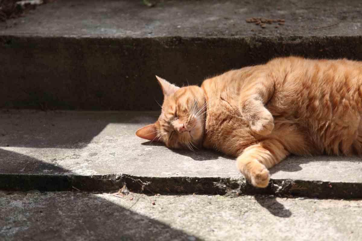 Quando bisogna preoccuparsi del russare del gatto (foto Pixabay)