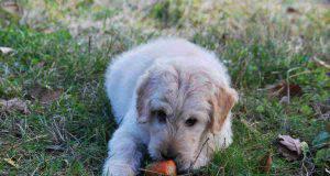 cane insufficienza renale cibo