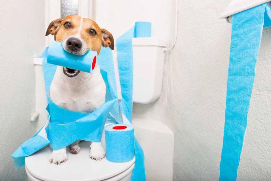Alimentazione cane con diarrea