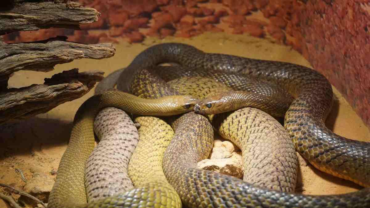 La riproduzione del serpente (Pixabay)