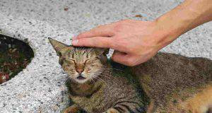 Reiki sul gatto