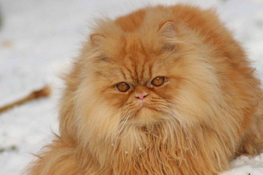 gatto freddo neve