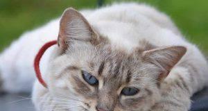 apprendere la mindfullness da gatto