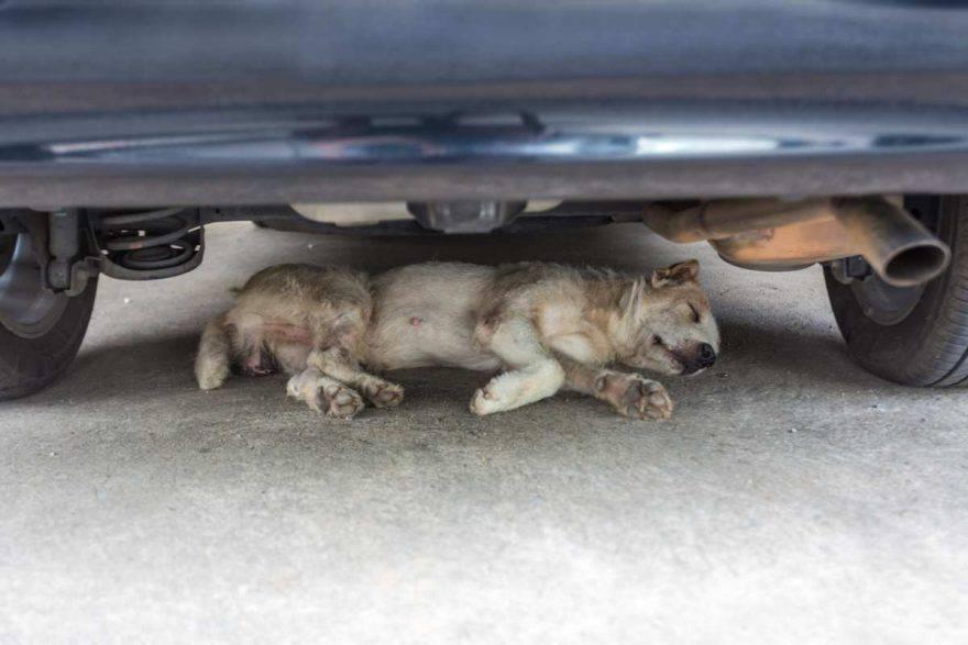 avvelenamento da antigelo nel cane