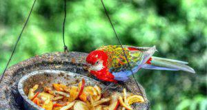 cambiare dieta pappagallo
