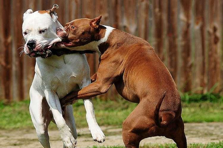 comportamento cane geni