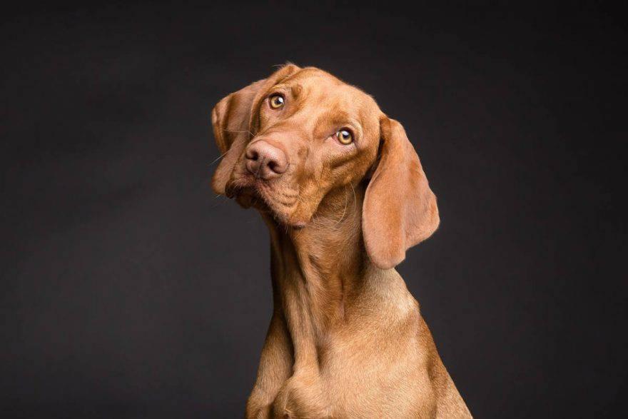 quando portare il cane dal veterinario?