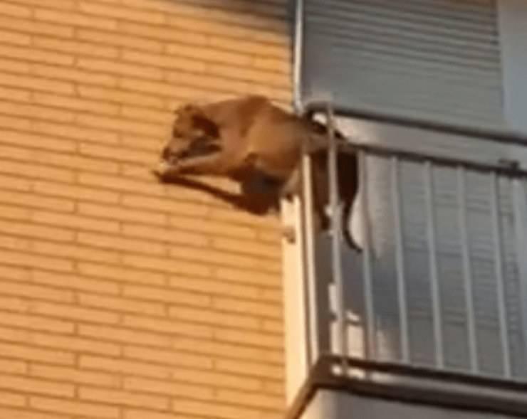 cane lasciato in balcone