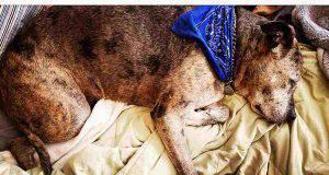 cane con artrite,come alleviare dolore