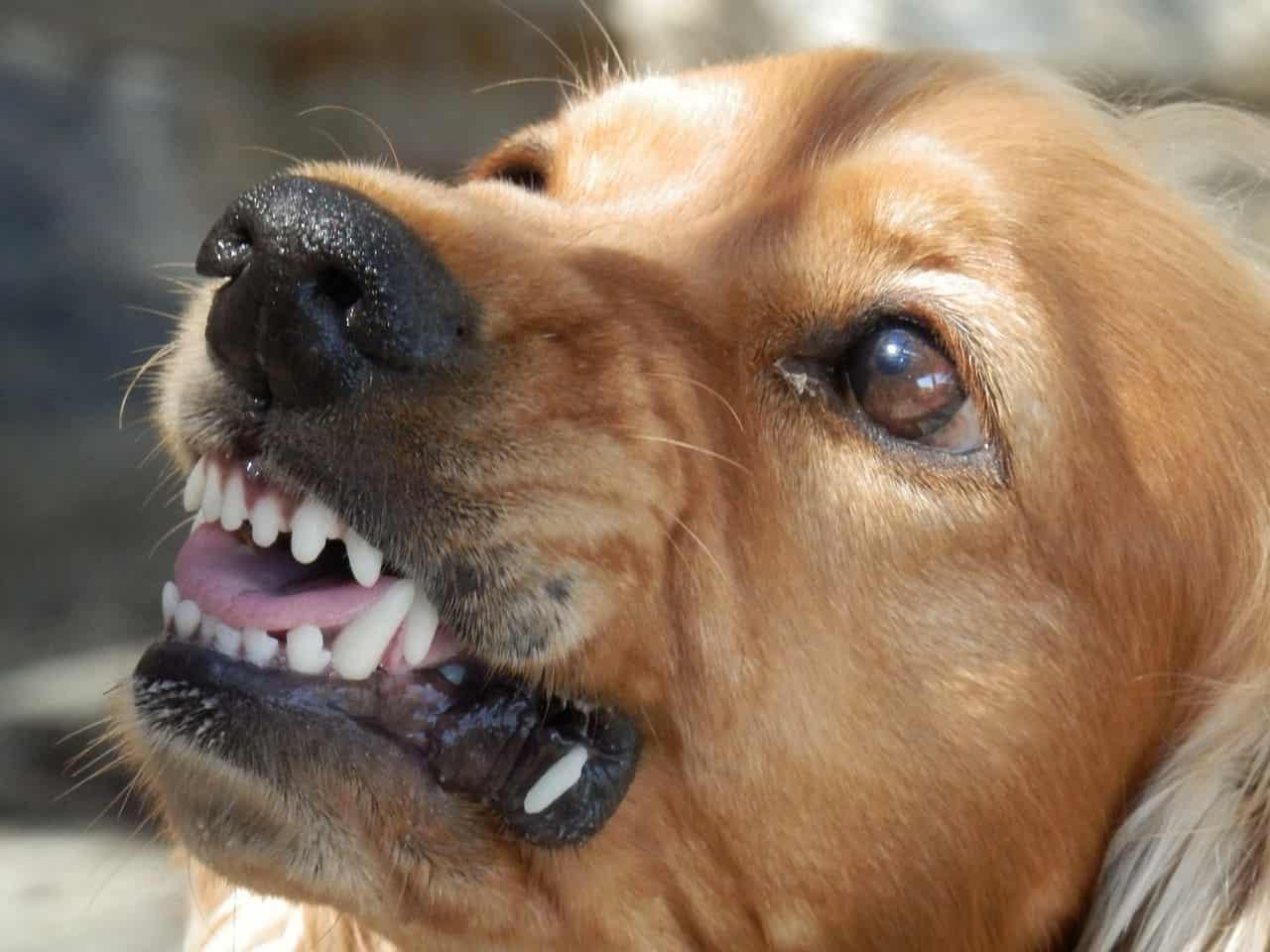 cane detesta alcune persone
