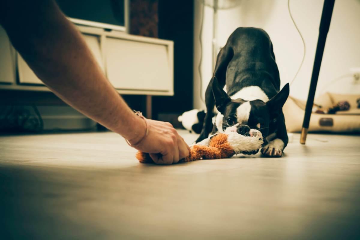 Giochi da fare in casa con il cane