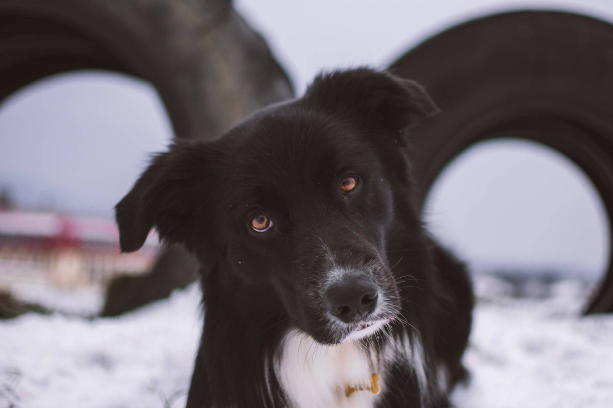 cane inclina testa quando parliamo