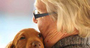 Come aiutare il cane a vivere piu a lungo