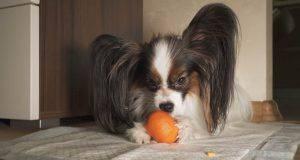 cane mangia arance