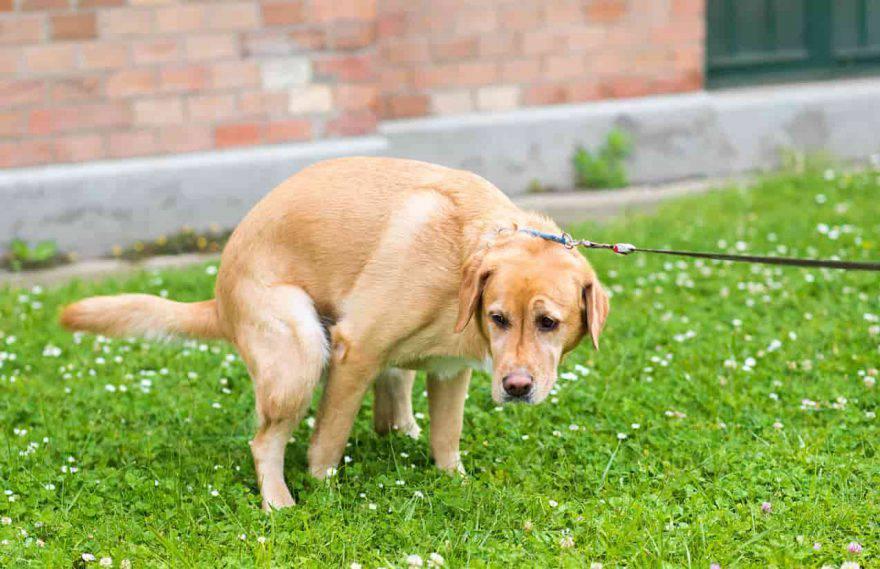 cane muove terreno dopo bisogni