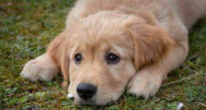 cane nei prati troppo cibo cane
