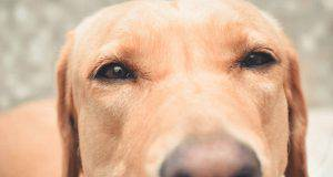 cane odia sentirsi soffiare muso