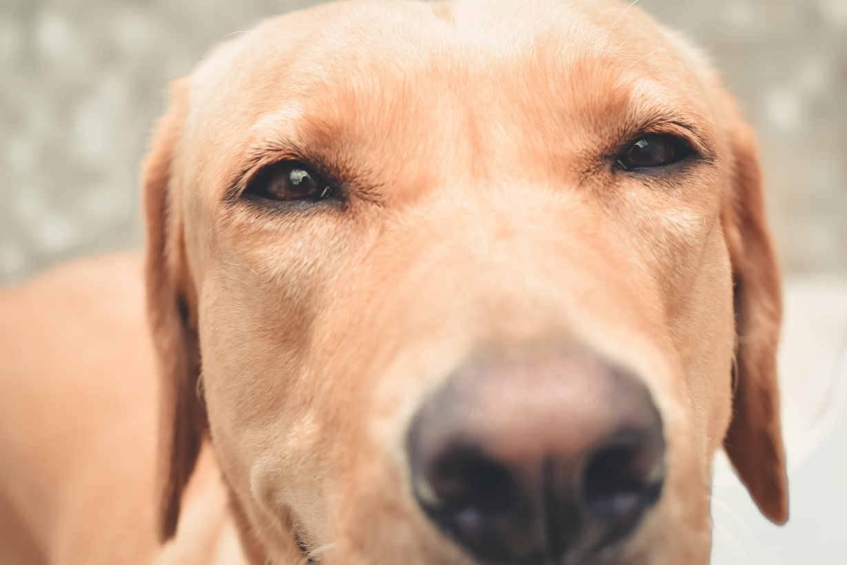 cane detesta sentirsi soffiare muso