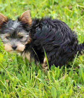 cane raspa terra dopo bisogni