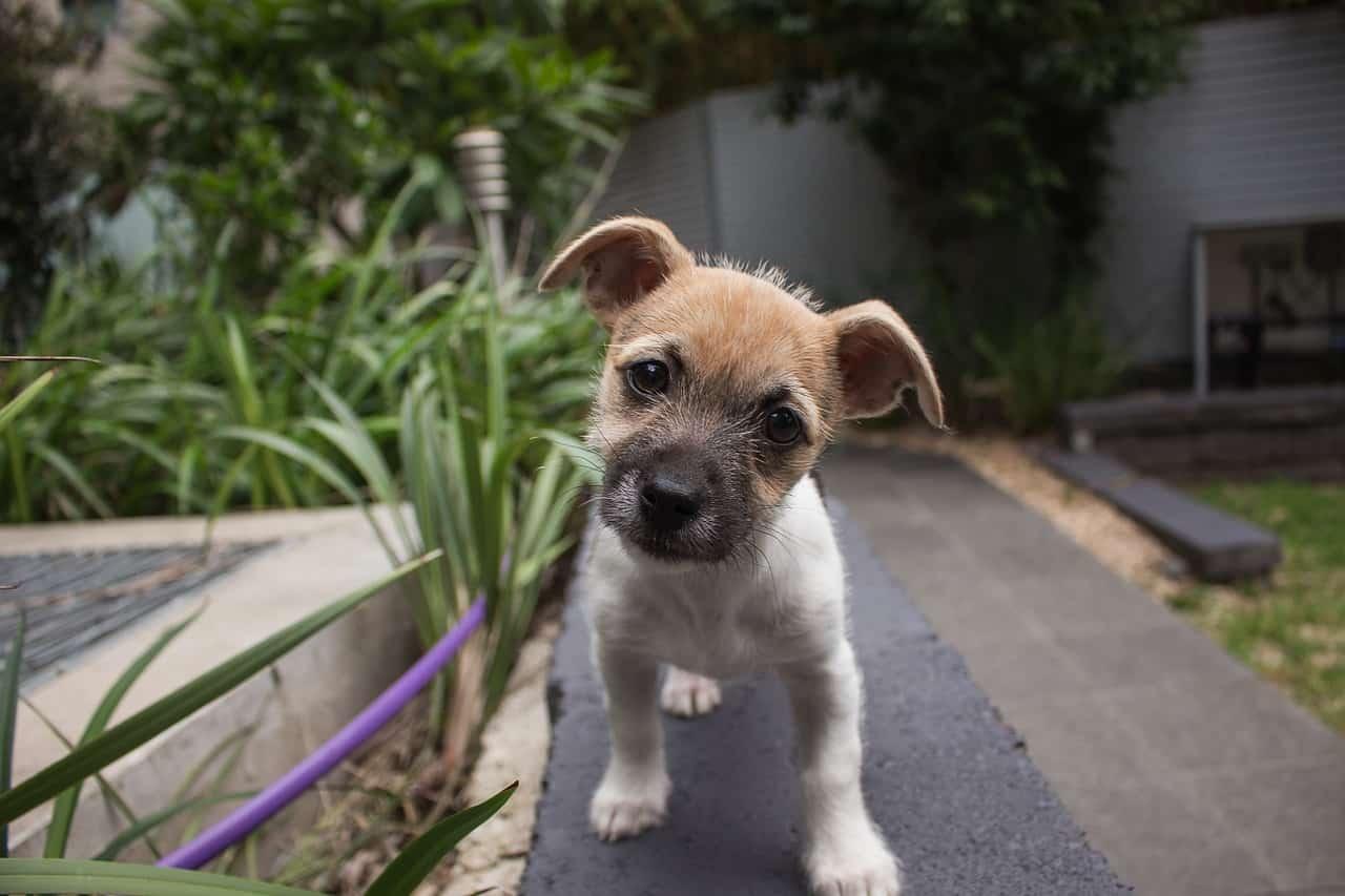 cane testa inclinata mentre comunichiamo