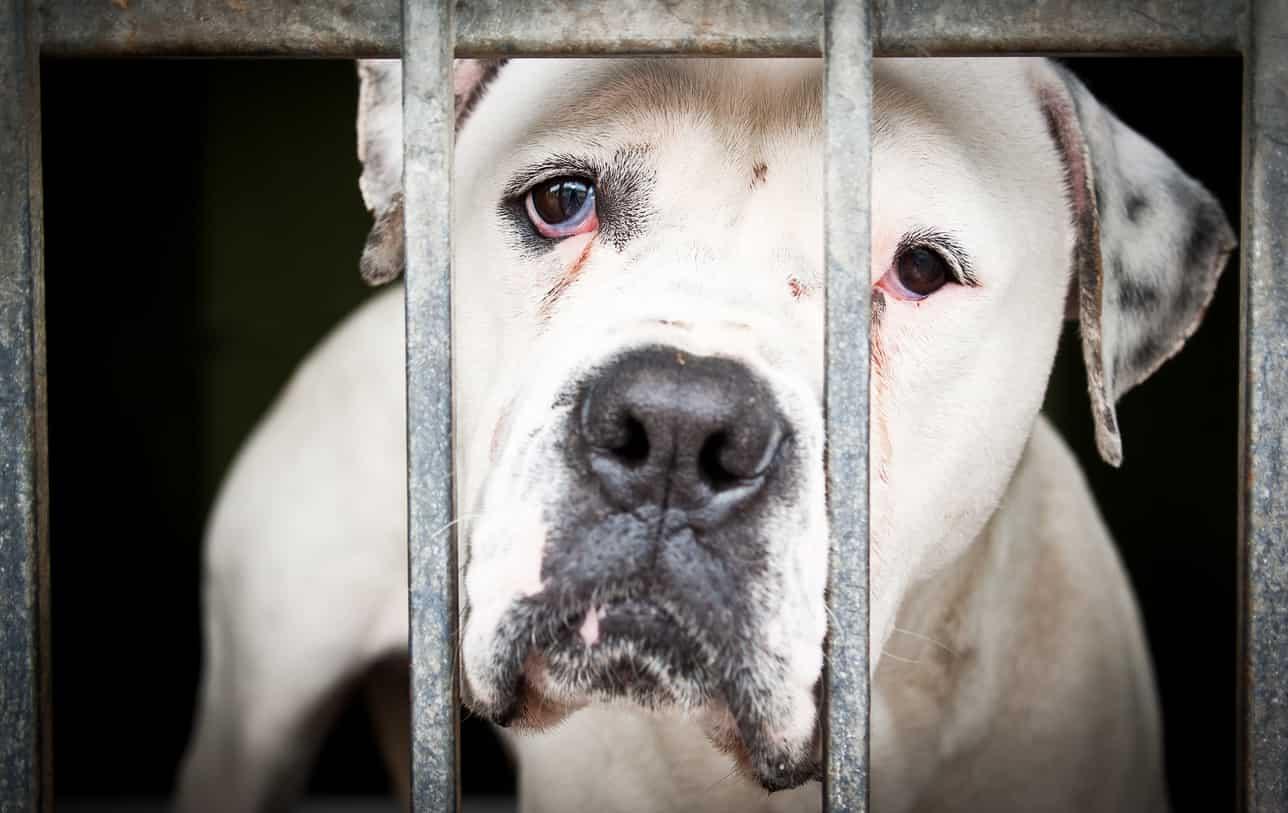 capire se un cane è stato maltrattato