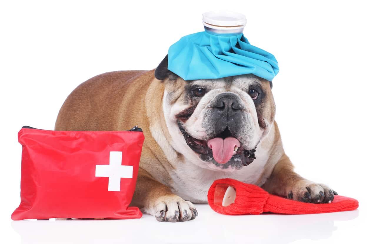 Kit di pronto soccorso per il cane