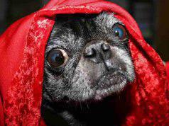 il cane ha freddo