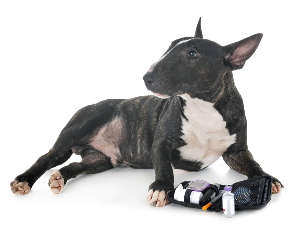 complicazioni del diabete nel cane