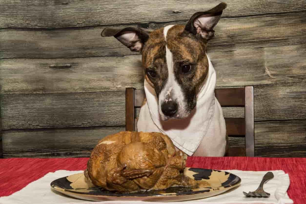 cane ossa pollo
