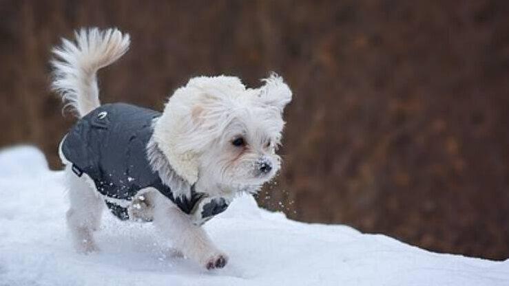L abbigliamento adatto per il cane in inverno