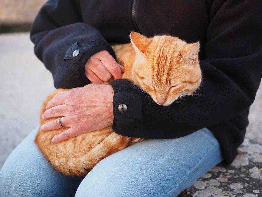 Artrite nel gatto ama padrone