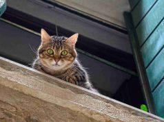 Sbalzi di temperatura gatto