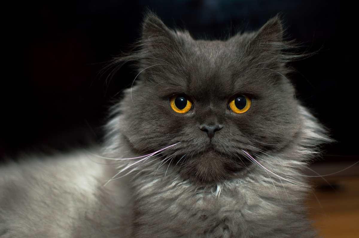 cure gatto anziano