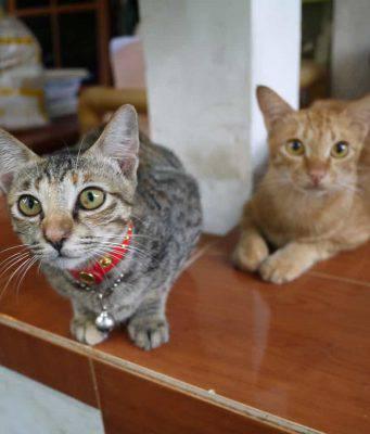 sostanze tossiche gatto