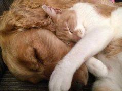 clonazione cane e gatto