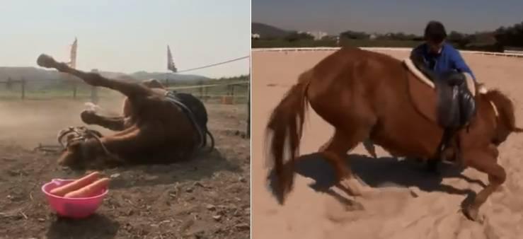 cavallo finge morto