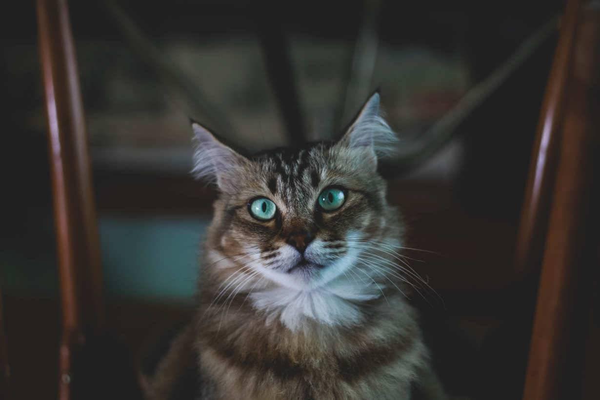 cinque sensi gatto